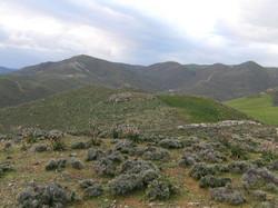 Land in Crete-13