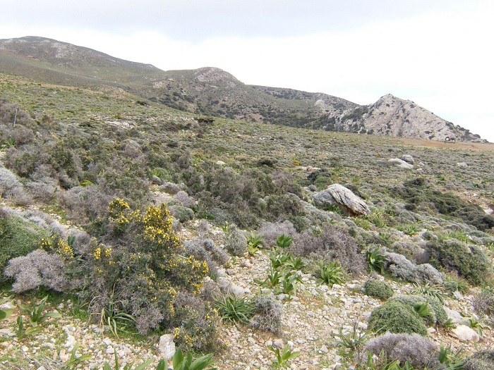 Land in Crete-22