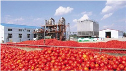 Agricultural Product Processing Plant