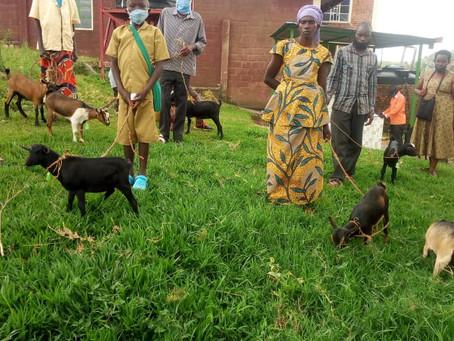 Donatie van 10 geiten
