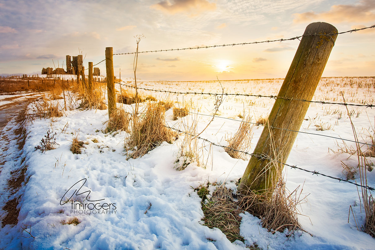 Fence posts at Bawsey.jpg