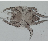 Common Winter Ailments: Mites and Lice
