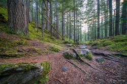 Kuskanax Creek Trail