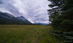 Treelined Valley
