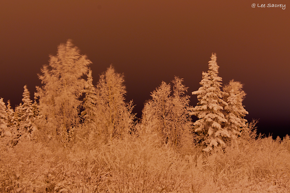 Frost Bitten Forest