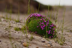 Tundra Vegetation