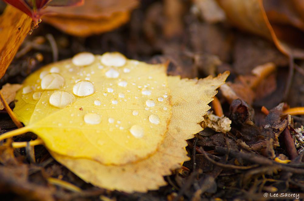 Leafy Water Droplets