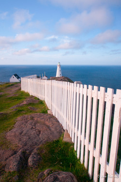 Cape Spear Fence line
