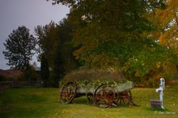 Dunvegan Wagon