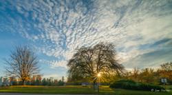 Lighting Stanley Park's Trees
