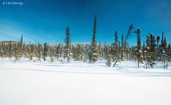 Winter Road Scenic