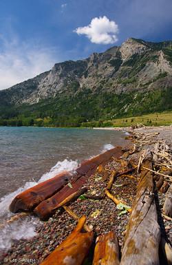 Waterton Lakes Driftwood