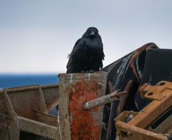 Raven's Post