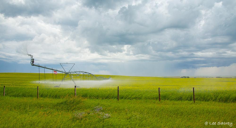 Irigation Showers
