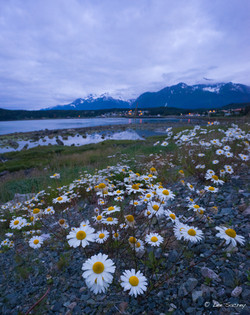 Daisy's in Haines