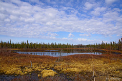 NWT Pond in Spring