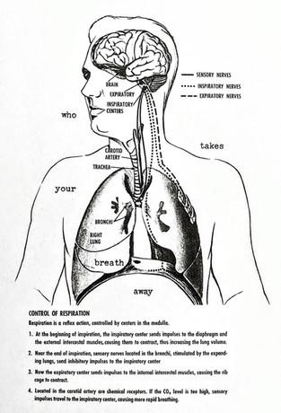 Control of Respiration.jpg