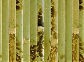 Бамбук. Бамбуковые обои. Покрытия из бамбука.