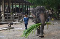 camp-elephants