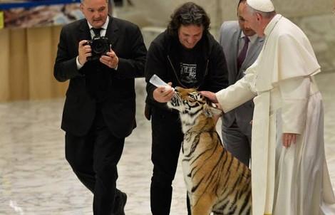 Римский папа благословил тигра