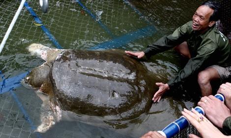 Во Вьетнаме смерть священной черепахи приняли за дурной знак для коммунистов