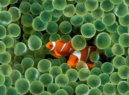 25 spunti ecologici per iniziare ora a salvaguardare la natura. Nasce ECONOW!