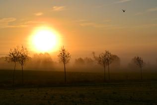 autumn morning.JPG