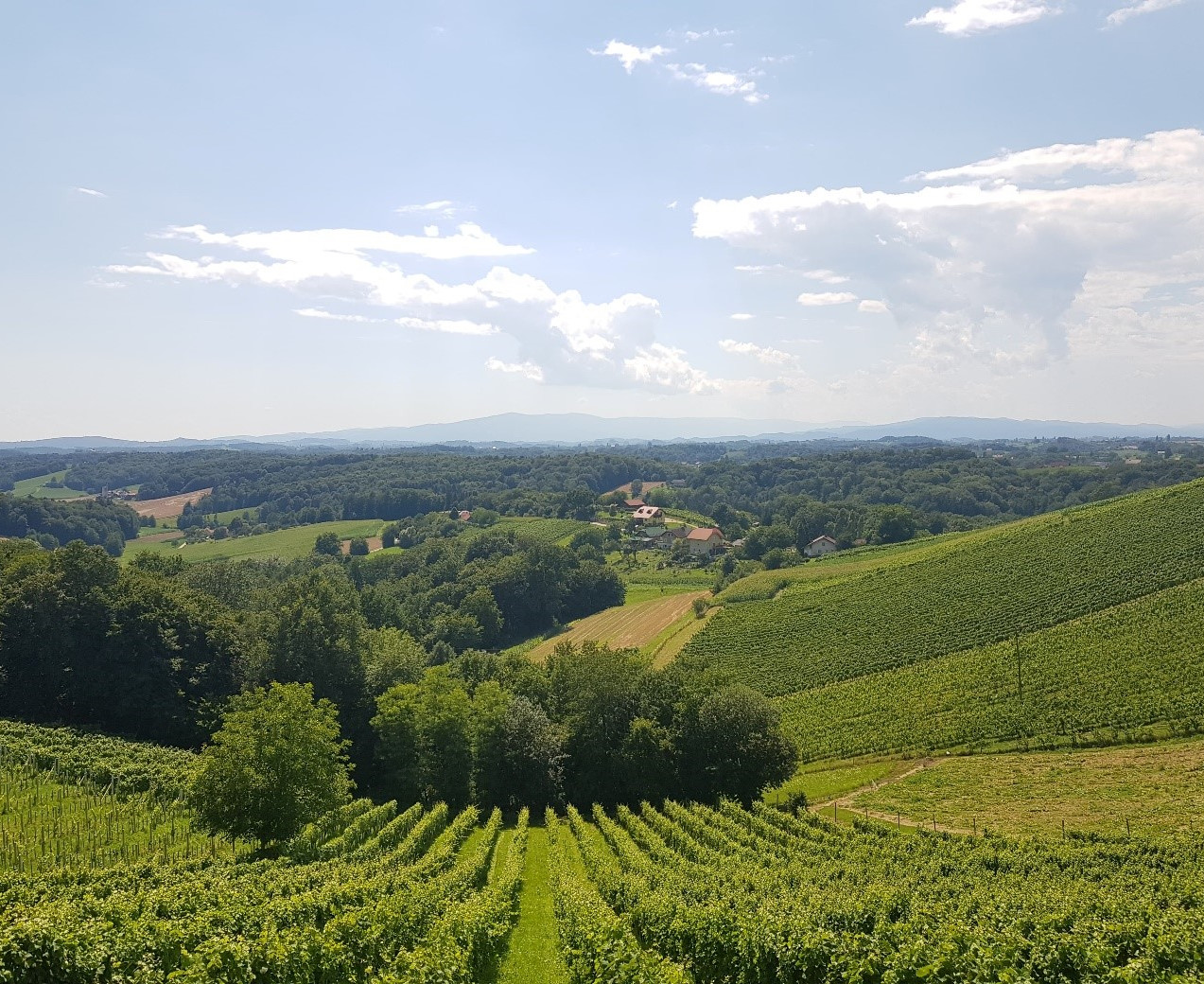 Vineyards in North-eastern Slovenia