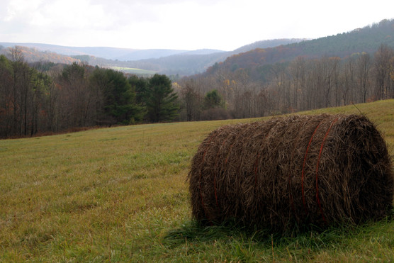 NY round bale w view across meadows 2 07