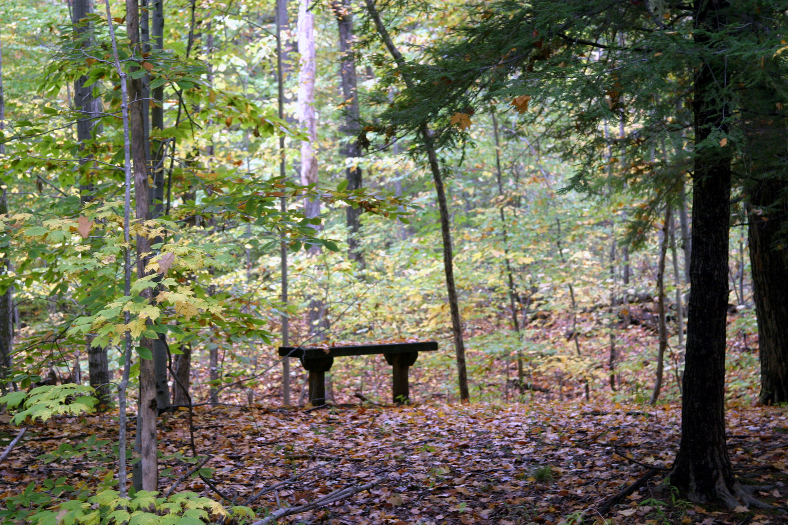 Holden flat bench view into woods 07.jpg