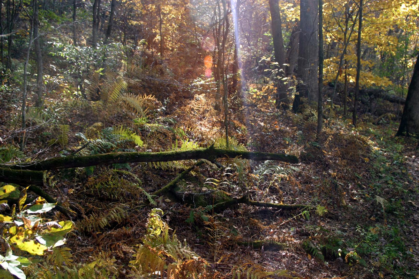 Light filtering into woods 2 Gov Dodge S