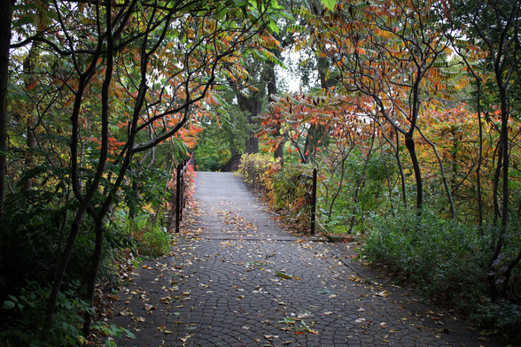 Rhus typhina frames path fall OBG Oct 16