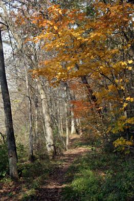 Gov Dodge SP path w yellow maples 06.jpg