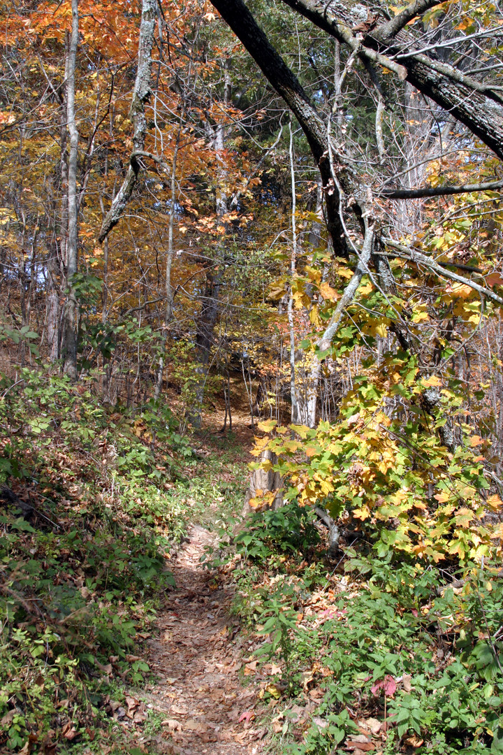 Woodland path 2 Gov Dodge SP 06.jpg