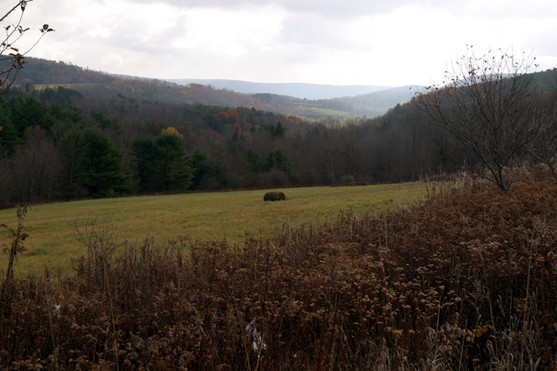 NY meadow view over round bale 2 07.jpg
