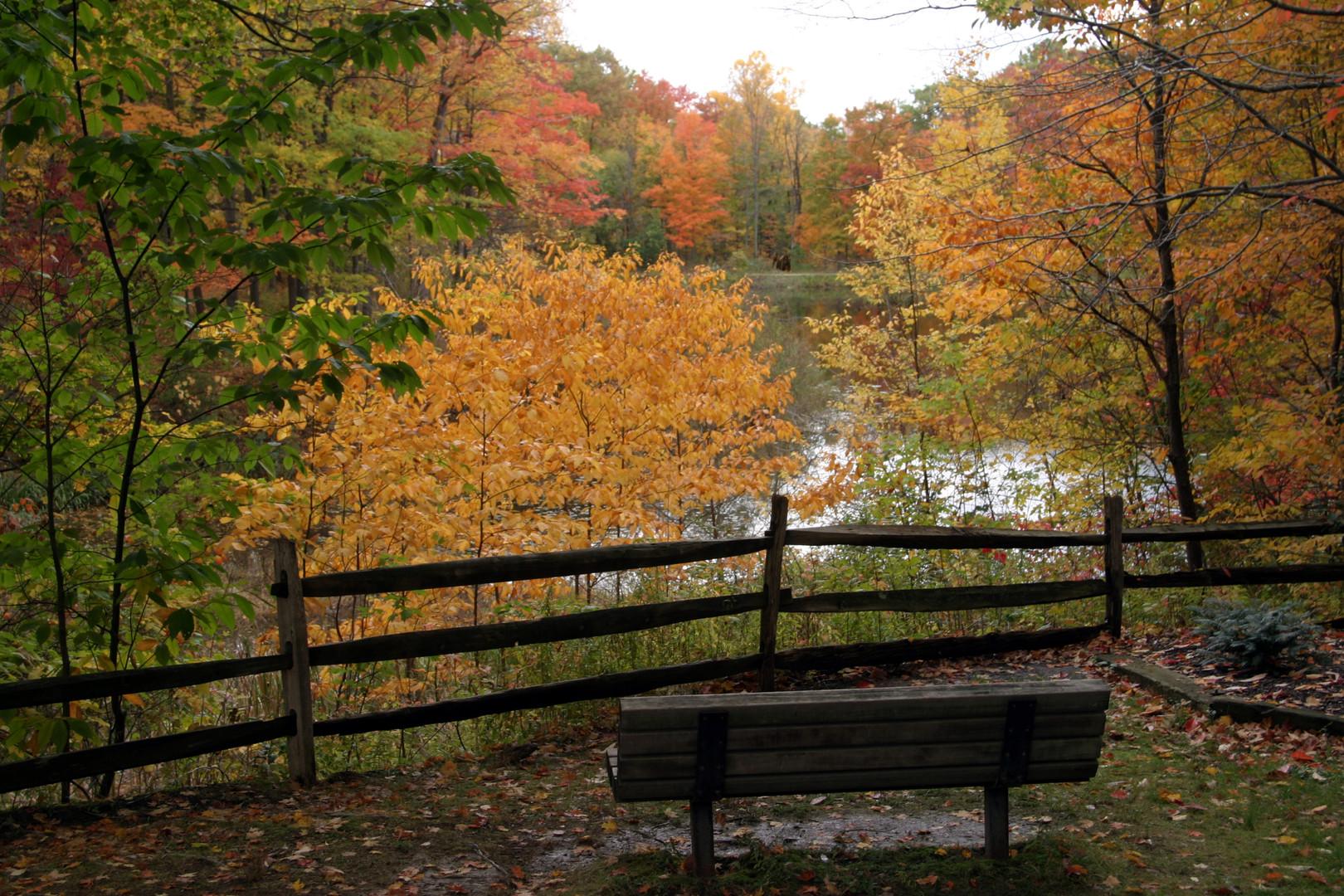 Holden Blueberry pond over split rail fe