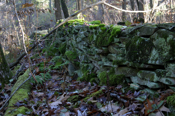 Rock & moss wall from upper Landis Arb 0