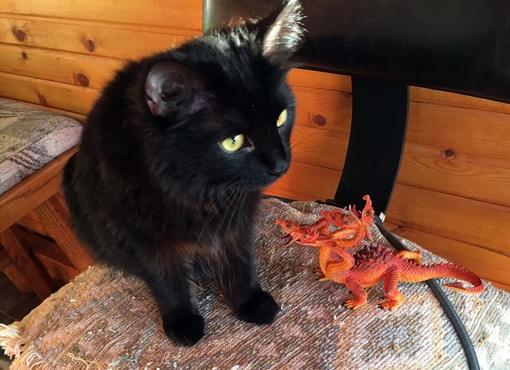 Dragon meeting Jadzia Katt