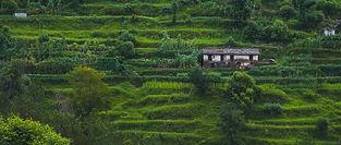 yogendra-singh-43yLnPJ4p3s-unsplash.jpg