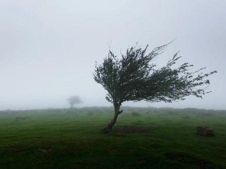 Marți, vânt puternic și ploi în toată Belgia