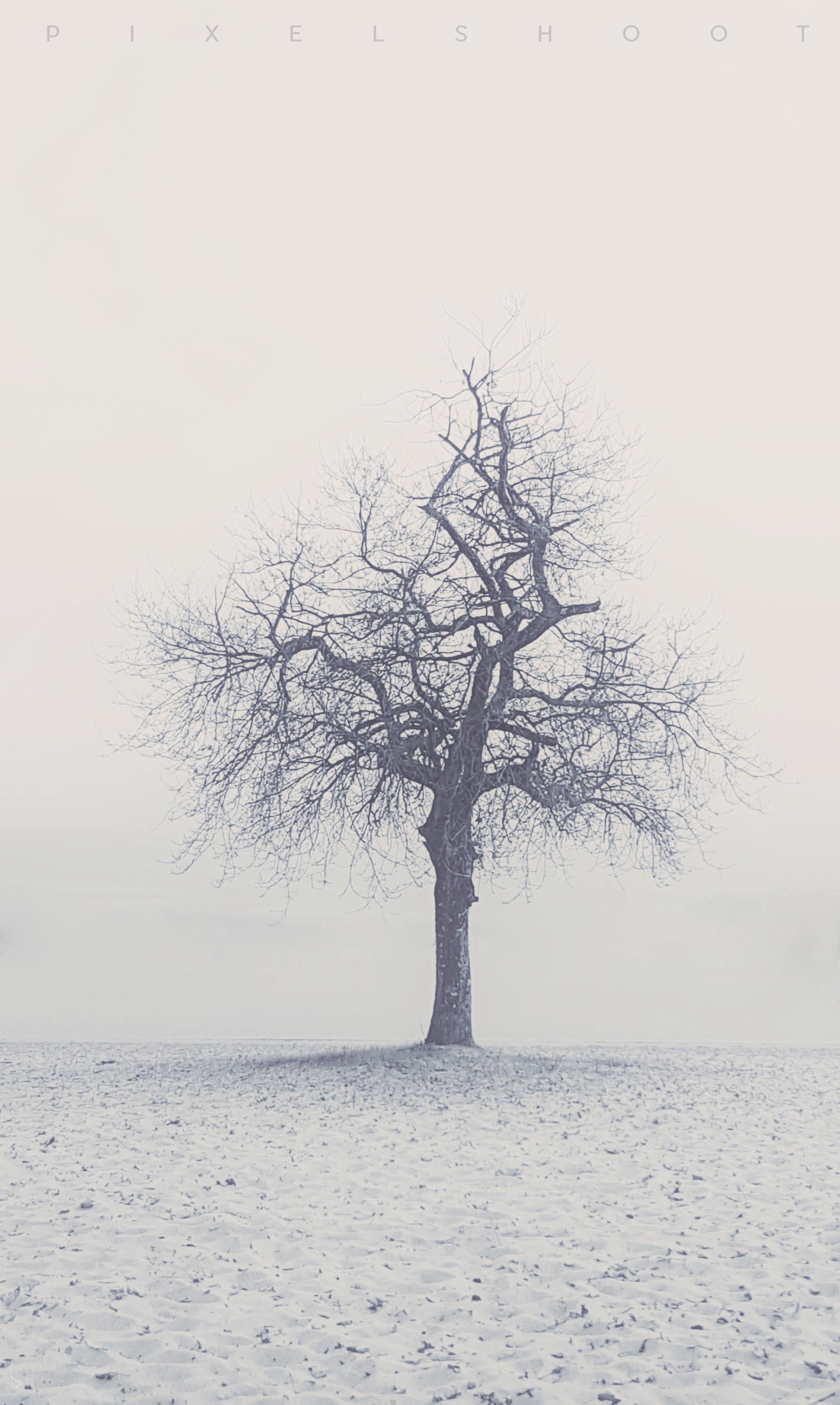 le moutchic arbre sur le lac 00001