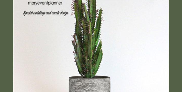 "CACTUS ""EUPHORBIA TRIGONA"" - Vaso di cemento"