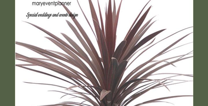 CORDYLINE AUSTRALIS - Vaso di metallo dorato