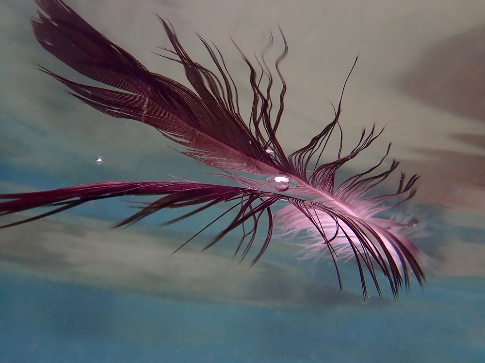 A feather floating on oceans surface