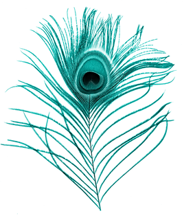 bwt_0017_peacock-feather.png