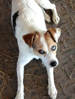 Best Barn Dog