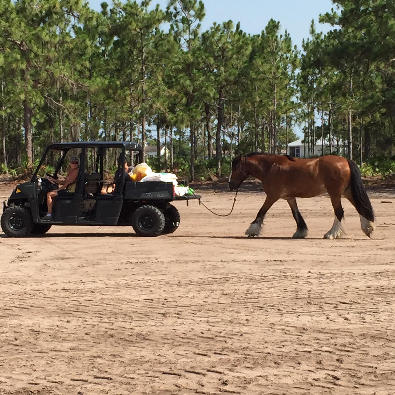 Ponying Tristan