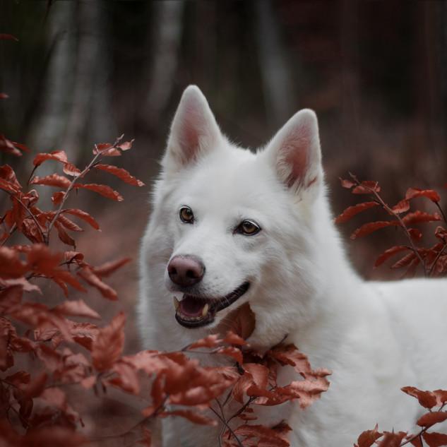 Rommy im Herbstlaub