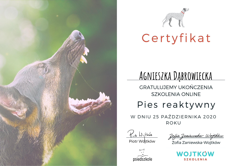 pies reaktywny certyfikat