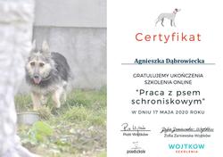 Certyfikat_pies_schroniskowy